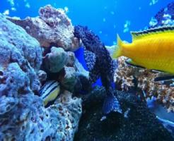 プレコ 稚魚 水槽 餌