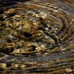 コリドラスの飼育!湧き水にする理由や利点は何!?