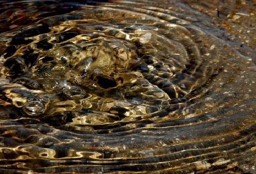 コリドラス 湧き水 理由