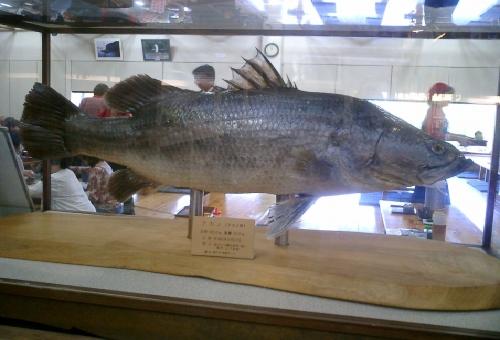 アカメ 魚 とは