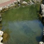 ニジマスを池で飼育する方法について!