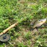 ブルーギルの針を飲み込まない釣りの方法!針のサイズや付け方は?