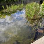 タナゴの飼育!庭池での方法について!