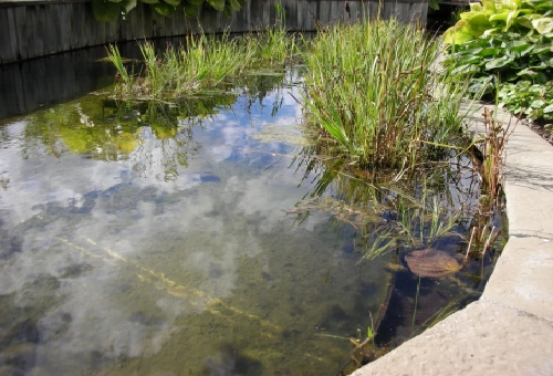 タナゴ 飼育 池