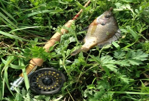 ブルーギル 釣り方 エサ