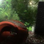 ヨシノボリと混泳飼育できる熱帯魚って何!?