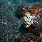 不思議な海の生物「ウミウシ」の生態について!