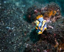 ウミウシ 海 生物