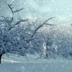 ドジョウの生態について!冬は冬眠するの!?