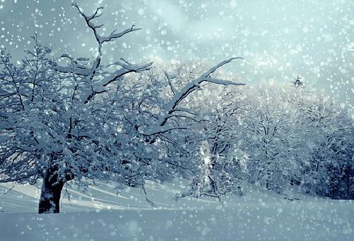 ドジョウ 生態 冬