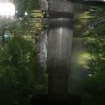 川魚ヨシノボリの上手な飼育方法について!