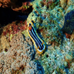 海水魚ウミウシの上手な飼育方法について!