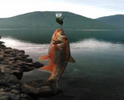 ウグイ 時期 釣り