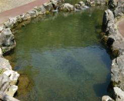 ニジマス 飼育 池