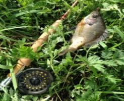 ブルーギル 釣り方 餌