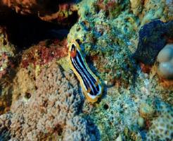 ウミウシ 飼育 海水